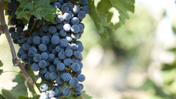 atractions_wine